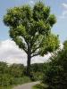 einzelner Baum am Wegesrand