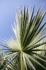 Von Sonne angestrahlte Palme # 2