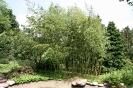 """kleiner Bambus-""""Wald"""""""
