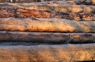 geschlagenes Holz