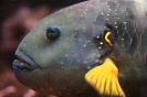Fisch mit gelbe Flossen