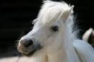 grinsendes Pony ?
