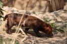 Waldhund im Zoo