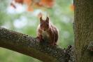Eichhörnchen # 3
