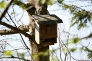 Vogelhäuschen am Baum